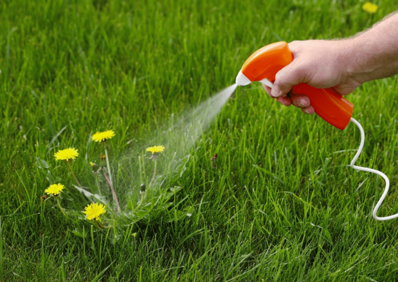 how to kill dandelions in lawn