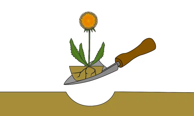 how to kill dandelions naturally