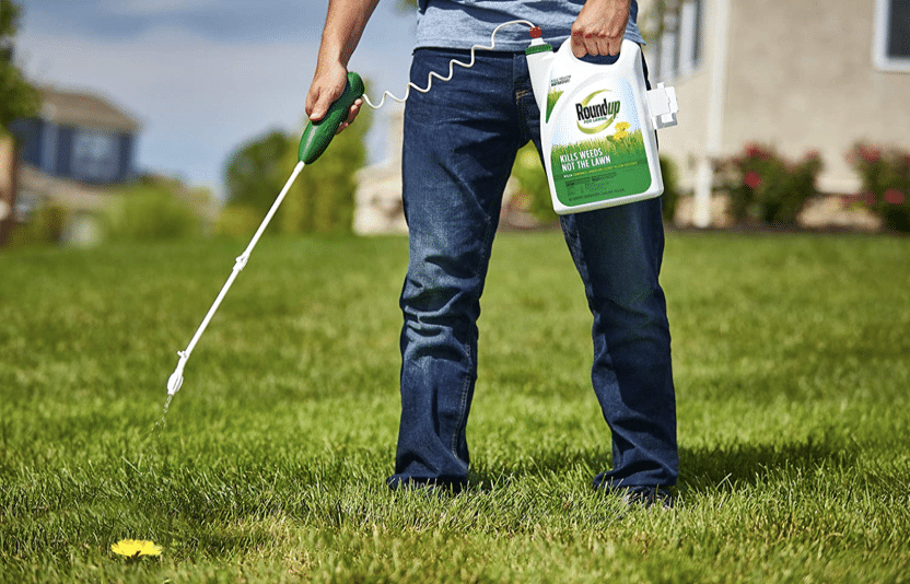 best time to apply dandelion killer